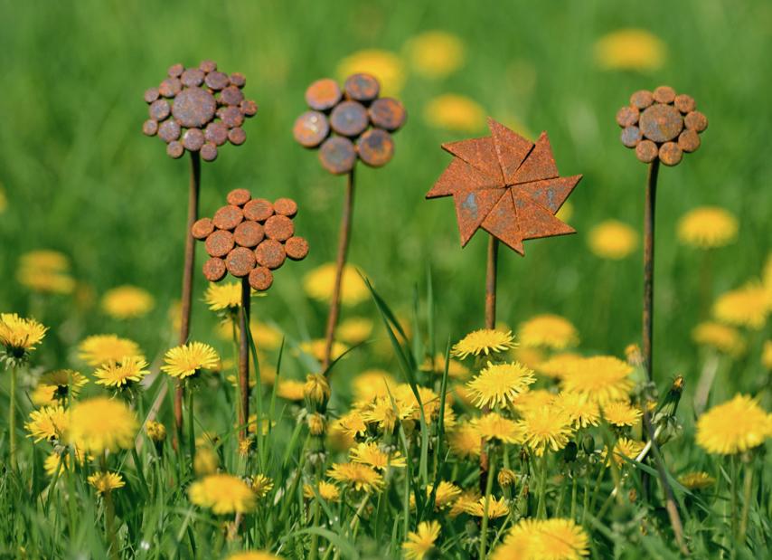 Olika rostiga blommor, foto av Torbjörn Skogedal
